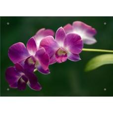 """Картина на стекле """" """"Орхидея"""""""""""